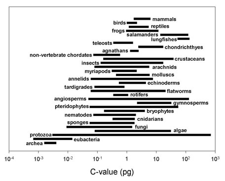Summary figure of C-Values from Gregory 2004a